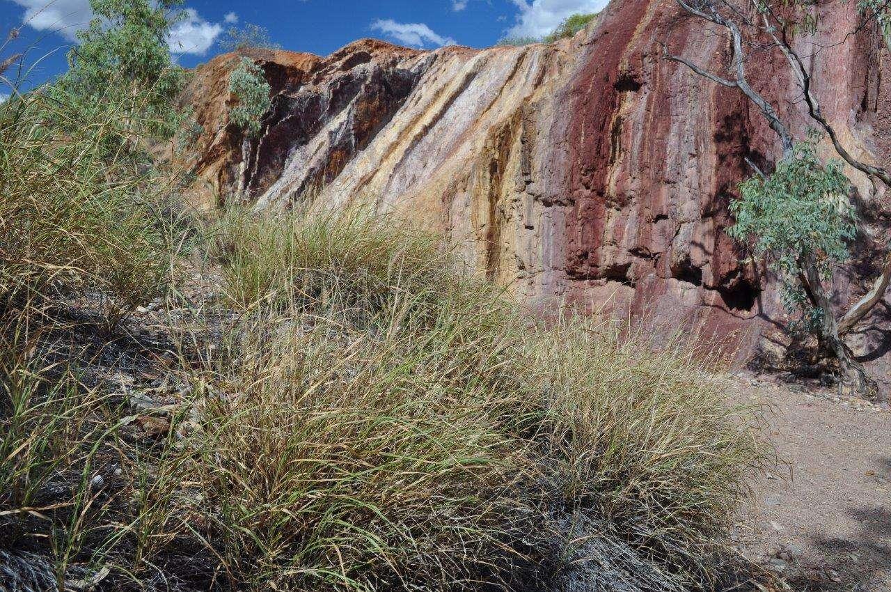 Buffel grass invasion of MacDonald Ranges, Central Australia