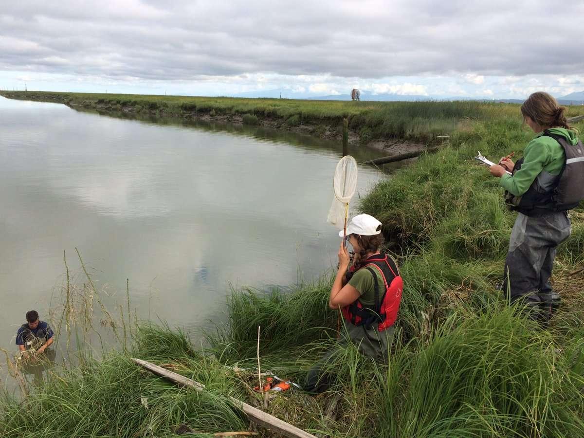Lia Chalifour et al fieldwork Fraser1